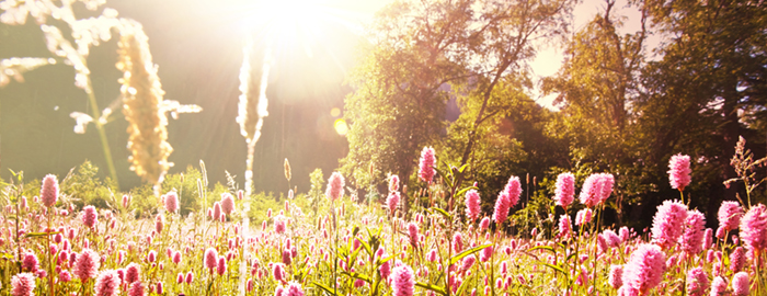 Wildflowers in Mountain Meadow